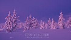 Finnland Wintertraum_10