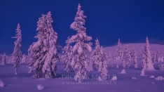 Finnland Wintertraum_12