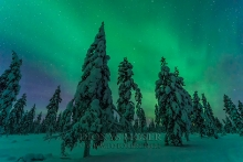Finnland Wintertraum_17