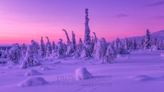 Finnland Wintertraum_24