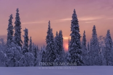Finnland Wintertraum_3