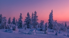 Finnland Wintertraum_5