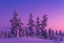 Finnland Wintertraum_6
