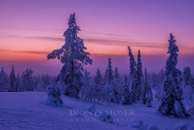 Finnland Wintertraum_7