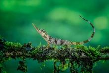 Echsen - Reptils