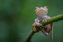 Frösche - frogs