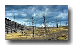 Abestorbener Wald am Vulkan Tolbatschik
