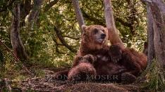 Bärenmutter beim Säugen der Jungen