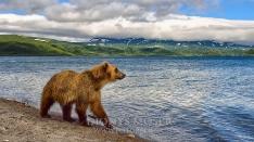 Kamtschatka-Braunbären_26