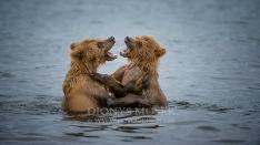Kamtschatka-Braunbären_4