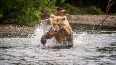 Kamtschatka-Braunbären_9