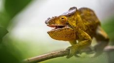 Reptilien und Schlangen