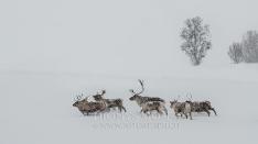 Tiere Norwegen