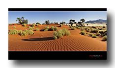 In der Wüste Namib